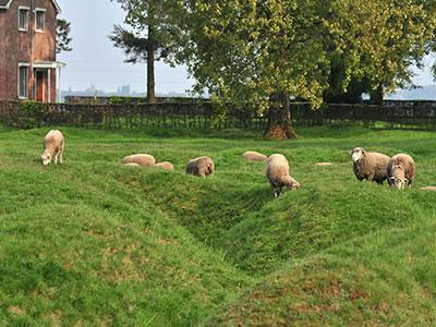 beaumont hamel tranchees moutons, Somme