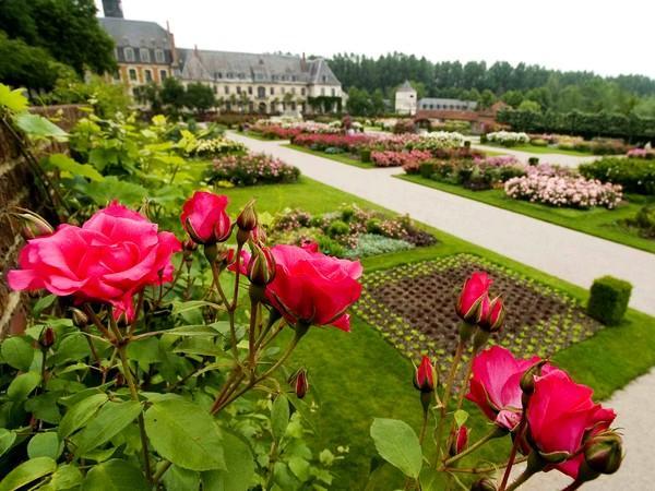 Jardins de Valloires_roses en fleurs ©Destination Baie de Somme