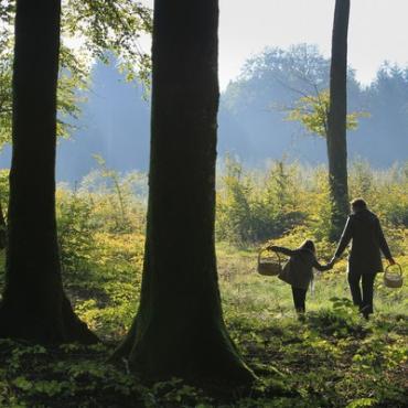 Forêt de Crécy