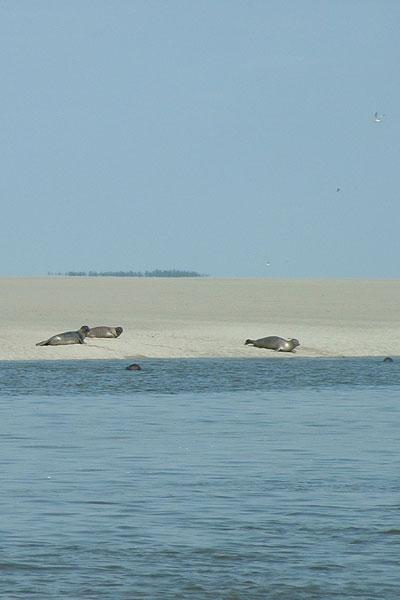 39-phoques-picnat.jpg