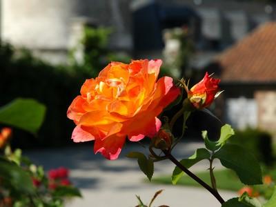 Argoules_Abbaye de valloires ©ADRT Somme