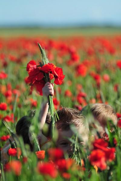 Le Coquelicot Fleur Du Souvenir