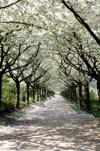 Jardins de Valloires ©Sommetourisme-JL
