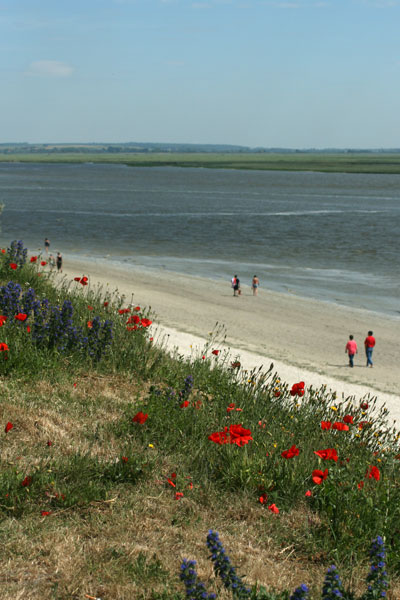 Plage, le Crotoy, Somme